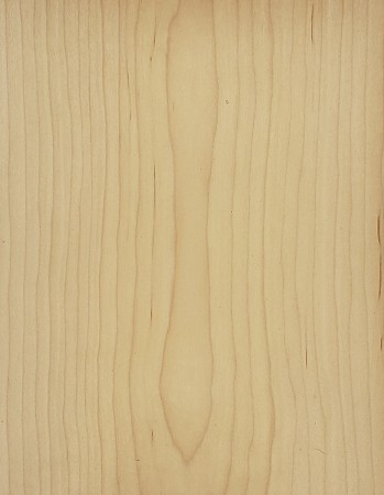 Maple Veneer With 3M Backing